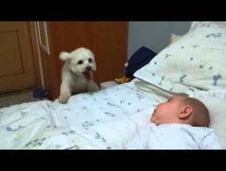 Pup wil absoluut die nieuwe baby zien