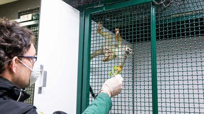 Douane neemt 150 exotische dieren in beslag