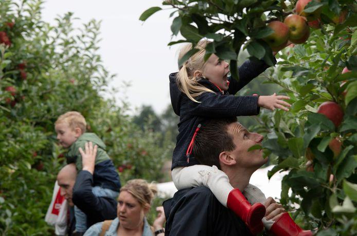 Bij teler Bert den Haan in Kerk-Avezaath kon jong en oud zaterdag appels plukken.