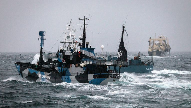 Links het schip van de milieubeweging Sea Shepherd, de Bob Barker. Beeld ap