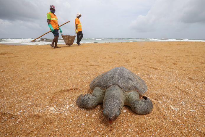 Naast plastic en ander afval stuiten deze opruimers ook op dode schildpadden.
