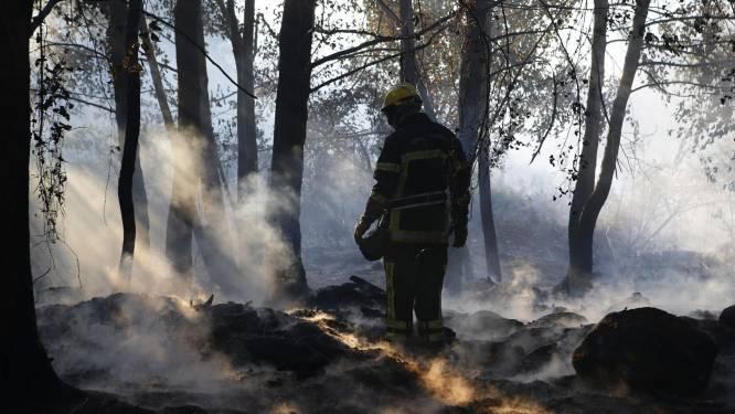 Bosbranden Corsica: man in verdenking gesteld van brandstichting