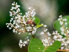 Piqûre des députés européens à la Commission pour mieux protéger les abeilles