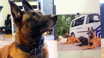 Slechtziende fotograaf maakt kalender met blindengeleidehonden voor De Warmste Week
