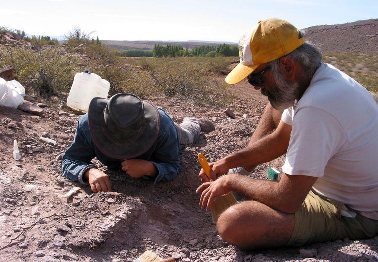 De wetenschappers hebben botten van de schedel en een grote hoeveelheid tanden gevonden. Andere botten van de nek, staart en rug zijn ook ontdekt.