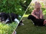 Te zoet: kinderen knuffelen met puppy's bij dagverblijf