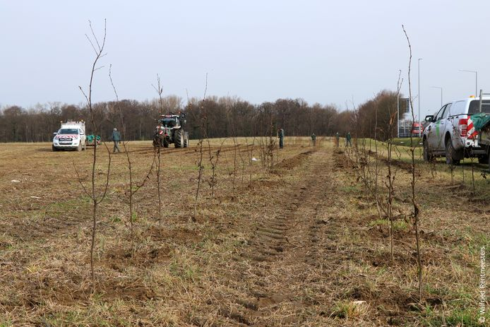 In Machelen werden maandag en dinsdag 4.000 bomen geplant.