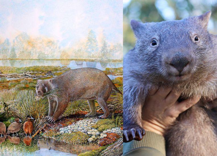 De Mukupirna nambensis en de wombat