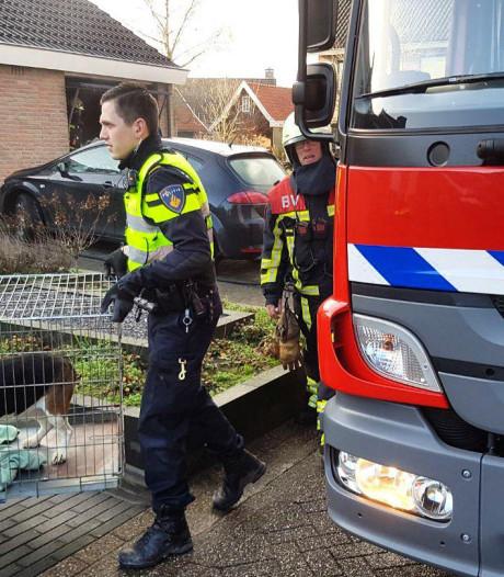 Brandweerlieden redden honden uit brandende garage in Geesteren