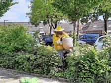 De imkers van de zwermbrigade schieten je te hulp wanneer in jouw tuin een heel bijenvolk landt