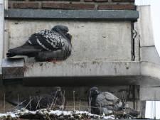 Enschedeër H. werd horendol van poepende duiven en ondernam zelf actie