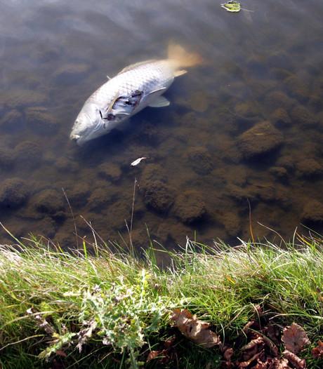 Waterschap onderzoekt vissterfte in Steenbergen