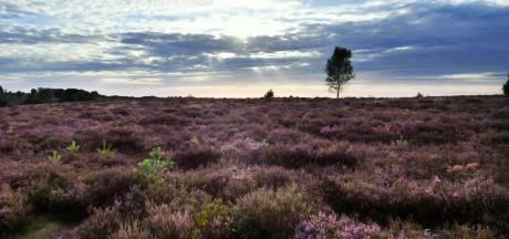Broedgebied Sallandse Heuvelrug voor tweede jaar op rij weken eerder afgesloten: 'Gevolg van het klimaat'