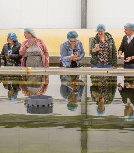 Foodbloggers uit de Randstad kijken hun ogen uit in Yerseke. 'Ik was een beetje huiverig of ik zo'n rauwe oester lekker zou vinden.'