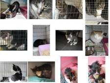 Verwilderde katten in Tilburgse buitendienst: muizen en ratten vangen