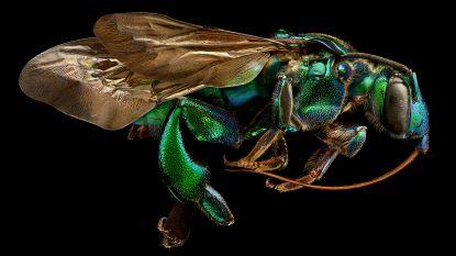 Fotograaf maakt een vijf millimeter groot insect plots drie meter lang. Het resultaat is ongekende verwondering