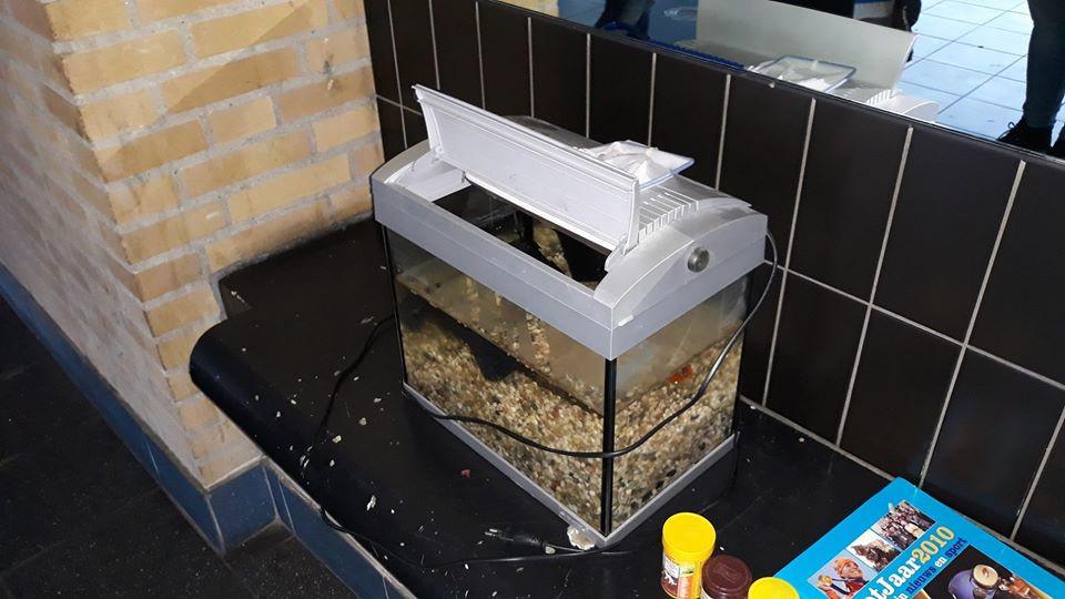 Het goudvisje werd met aquarium en al gedumpt in een portiek in Rotterdam.