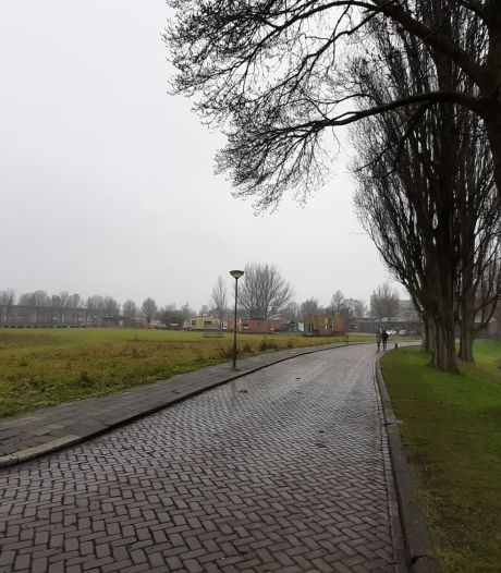 Stichting wil dat meer bomen behouden blijven bij bouw van nieuwe Dordtse villawijk