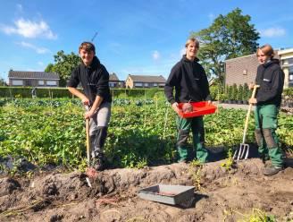 Leerlingen College ten Doorn kweken zoete aardappel in alle kleuren