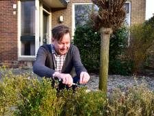 Buxusmot trekt een spoor van vernieling, maar de planten kunnen in de lente weer groeien