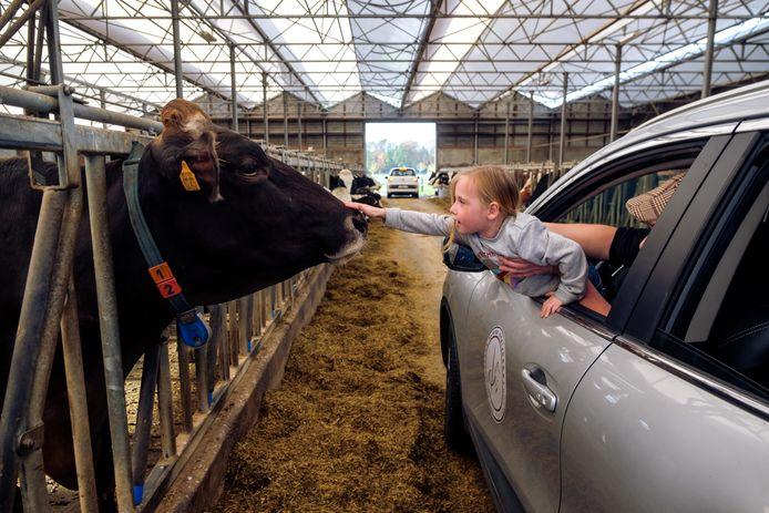 De kleine Maartje Verheijen (4) zag het wel zitten en aarzelde niet om de koeien en waterbuffels te aaien.