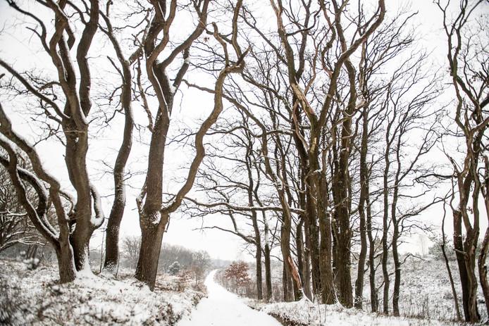 Sneeuw op de Noetselerberg in Nijverdal