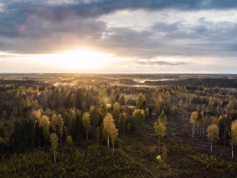 Op de voorgrond herbebossing door Graanul, rechts een ontbost gebied. Beeld Marlena Waldthausen