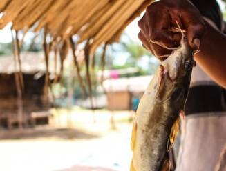 Vervuiling van de rivier Kasaï kost minstens 12 mensen het leven