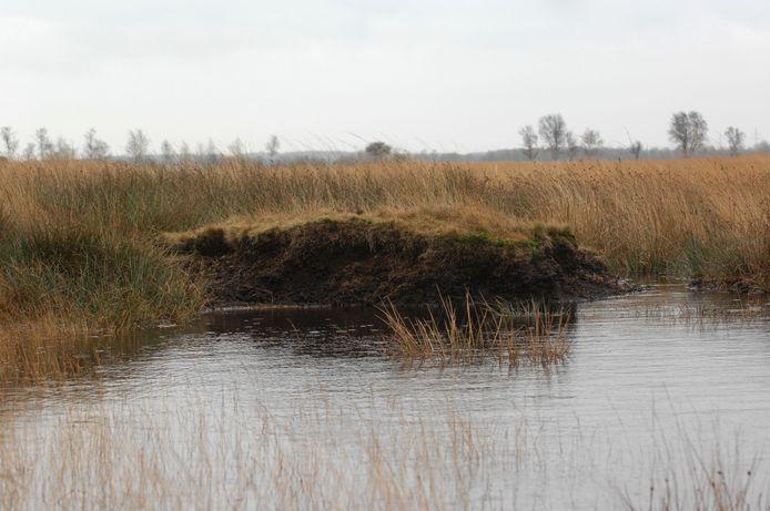 Binnenkort moet door de provincie de keuze worden gemaakt voor het Wierdense Veld: wordt de natuur hersteld zodat hoogveen zich kan ontwikkelen of krijgt de winning van drinkwater de voorkeur?