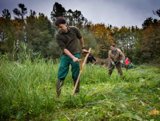 Natuurliefhebbers laten bosmaaiers aan kant en kiezen zeis om grasland Sint-Onolfspolder te maaien