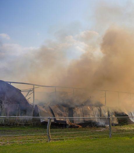 Grote brand in stal in Bemmel: acht paarden en veulen van 5 dagen oud veilig
