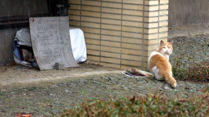 Na twee maanden zoeken al 40 zwerfkatten gevonden in Herenthout
