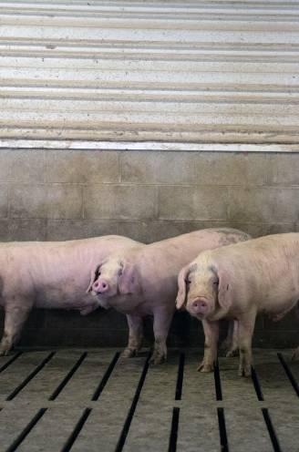 """Leuvense hoogleraar maakt de berekening: """"Zonder afbouw van de veestapel halen we milieudoelen nooit"""""""