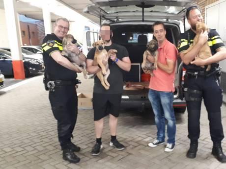Politie Westland neemt vier puppy's over van baasje die er financieel niet voor kon zorgen