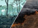WWF: 'Nederland een van grootste verantwoordelijken voor ontbossing'