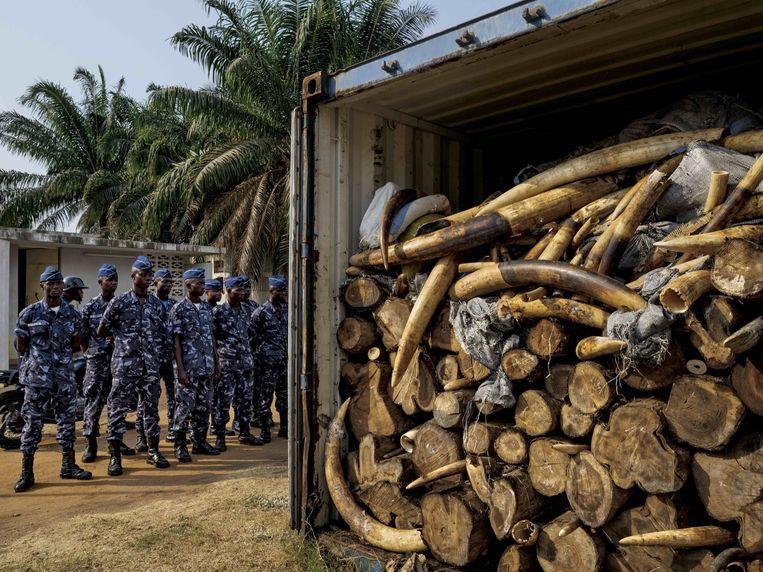 Ivoor dat is geconfisqueerd in Togo. Beeld Brent Stirton