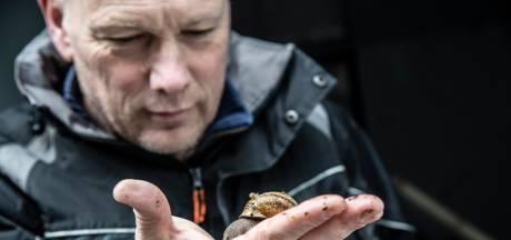 Nijmegenaar gaat slakken kweken met snij-afval van horeca: 'Fruit en sla eten ze het liefst'
