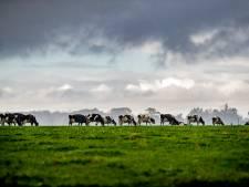 Toch minder stikstofgevoelige natuur in Gelderland, provincie past kaarten aan