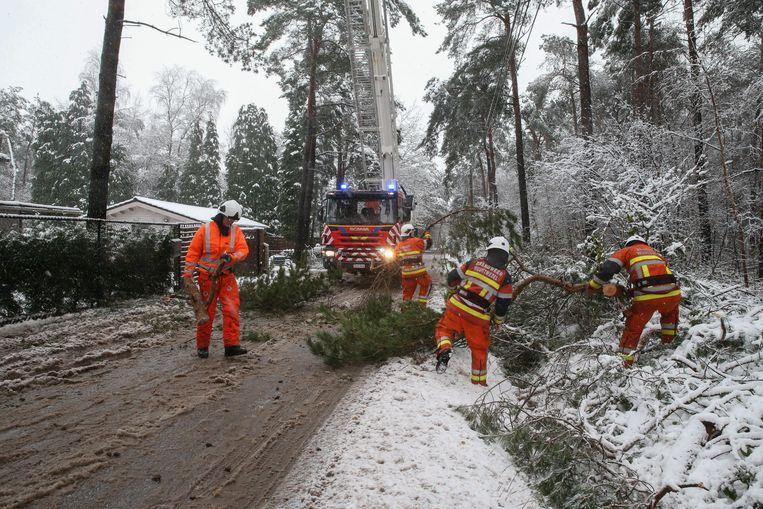 De brandweer ruimt afgebroken takken in Wuustwezel. Beeld De Roeck