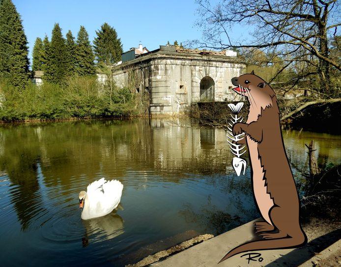 Met de vertelling 'Olga de Otter' maakt GroenRand de kinderen in de regio bewust van de impact van afval op het leefgebied van de otter.