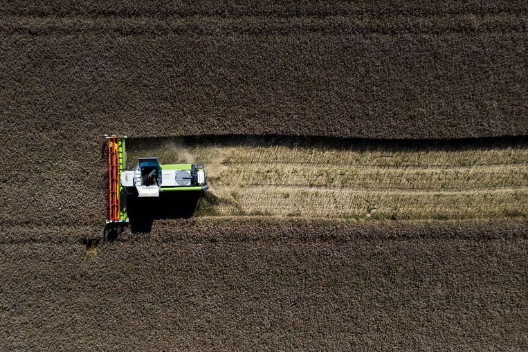 Een oogstmachine in actie in het Duitse Reichenbach, 30 juli.  Beeld Getty Images