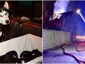 """Bewoners kunnen ontkomen aan felle brand, samen met husky's en zeven pups: """"Mijn kamer was al gevuld met rook"""""""
