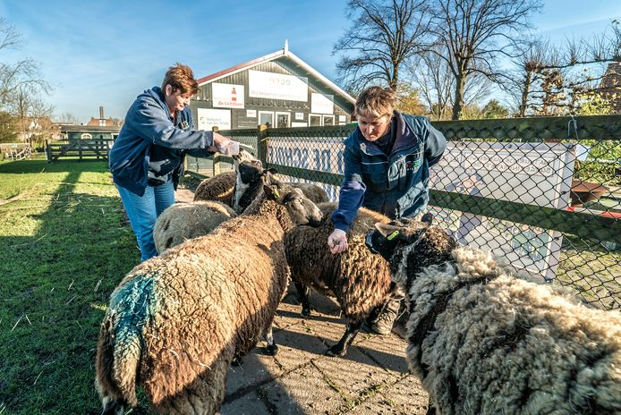 De mensen bij en rond Kinderboerderij Tanthof zien zich ernstig bedreigd in hun voortbestaan door de mogelijke komst van een mega-school in het gebied.