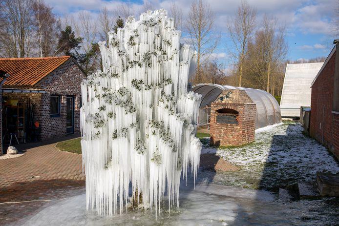 Ijsboom van Bart Vandevelde uit Sint-Truiden
