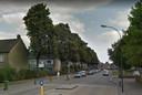 De lindes van de Groen van Prinstererlaan in Waalwijk in vol ornaat. De één verfoeit de rommel die er vanaf valt, de ander geniet van de schaduw.