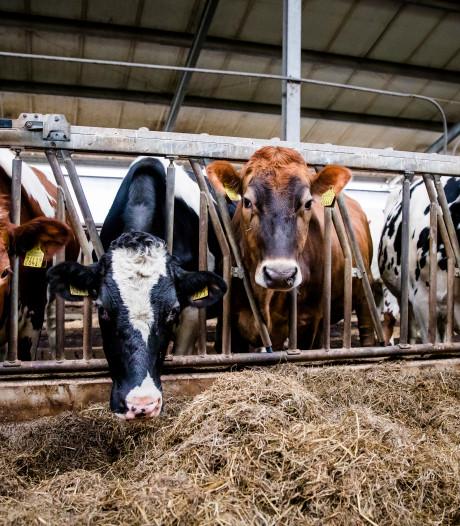 Fikse boete van ministerie voor melkveehouderij uit Vriezenveen
