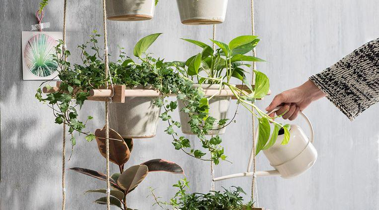 Plantenliefhebbers opgelet: deze vrolijke plantenhanger is écht wat voor jou