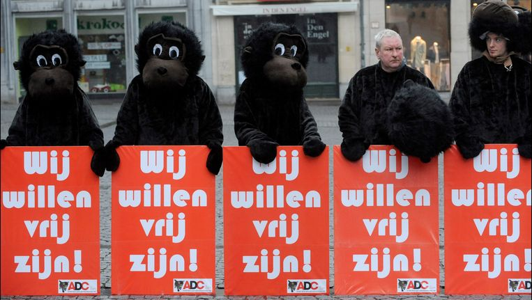Actie van de Anti Dierproeven Coalitie tegen apenexperimenten aan de KU Leuven (archiefbeeld). Beeld PHOTO_NEWS