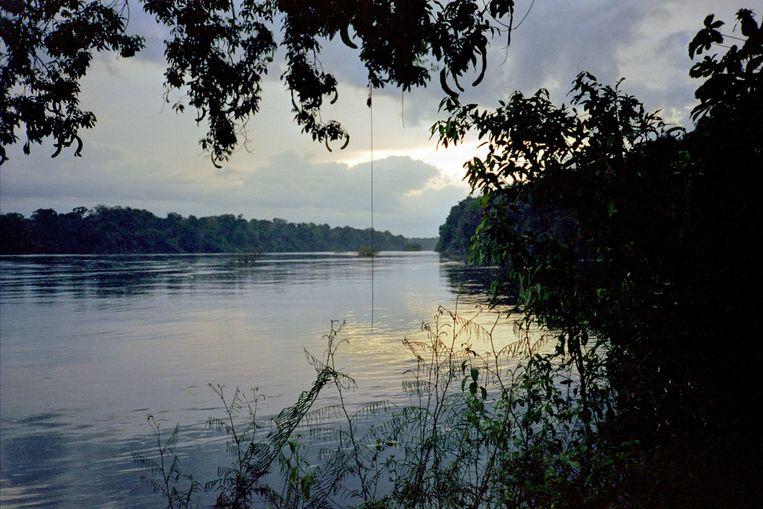 De Essequibo, een rivier in Guyana, tropisch leefgebied voor vissen. Beeld Raymond Sluiter