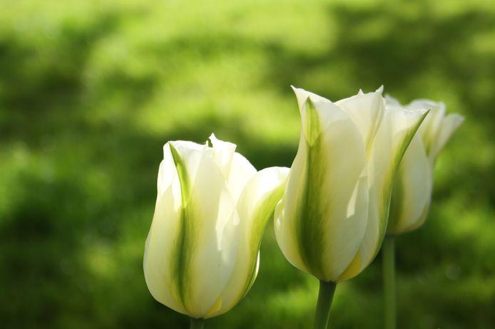 Mooi en niet duur: Spring Green.